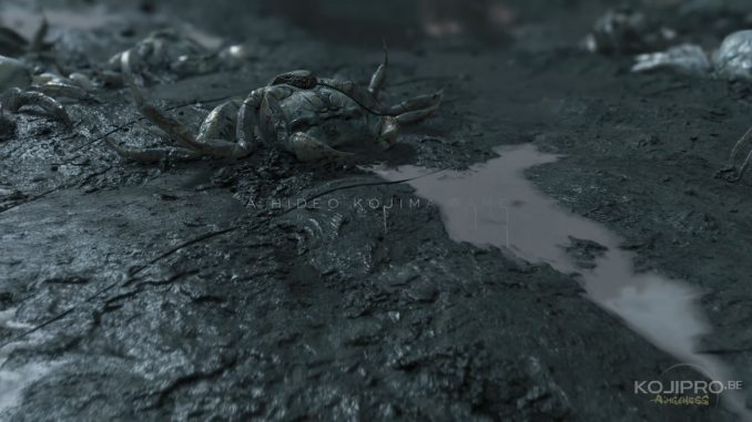 Cordon ombilical d'un crabe